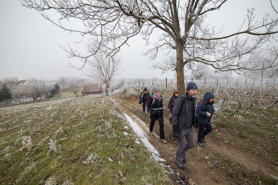 vincekovo walk&run (17)